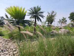 quy hoạch sử dụng đất vườn, mua đất vườn long phước, nhà vườn long phước, đất nền long phước, thị trường đất vườn quận 9, cù lao long phước
